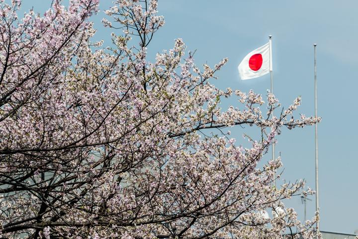 2-2016-桜 1.jpg