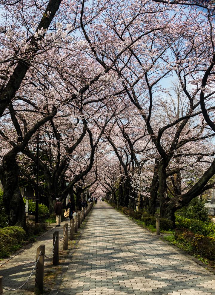 2-2016-桜 2.jpg