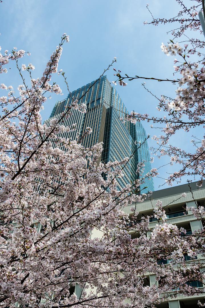2-2016-桜 4.jpg