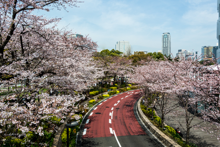 2-2016-桜 5.jpg