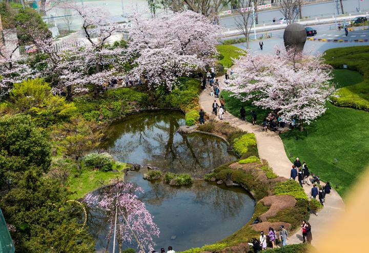 2-2016-桜 6.jpg