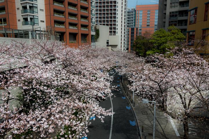 2-2016-桜 7.jpg