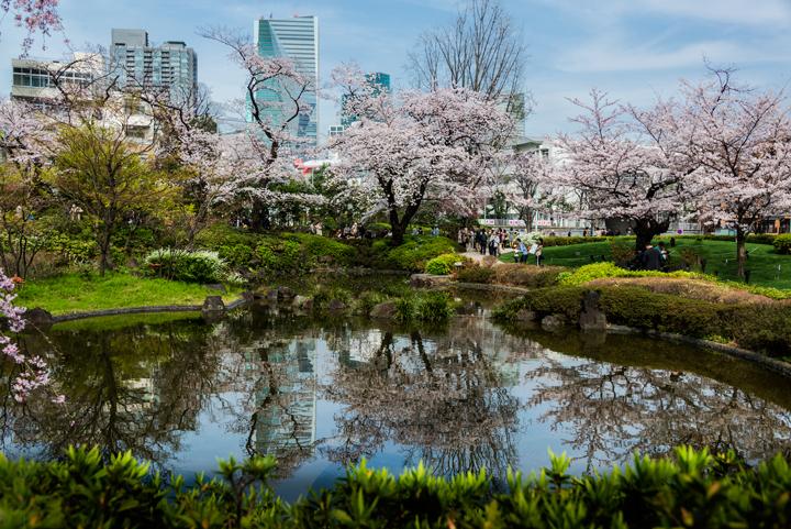 2-2016-桜 8.jpg