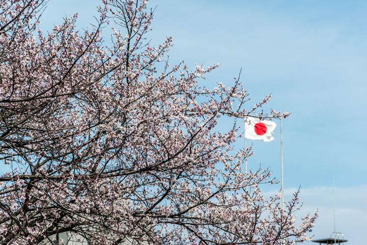 2016-桜 1.jpg