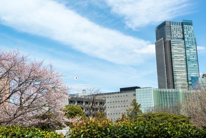 2016-桜 2.jpg