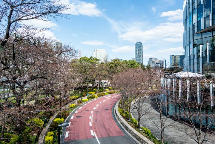 2016-桜 6.jpg