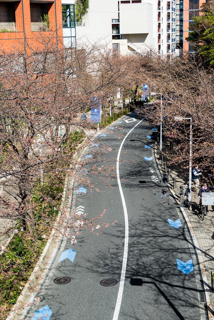 2016-桜 9.jpg