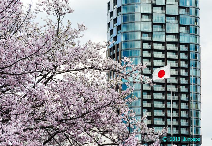 2018-桜 3.jpg