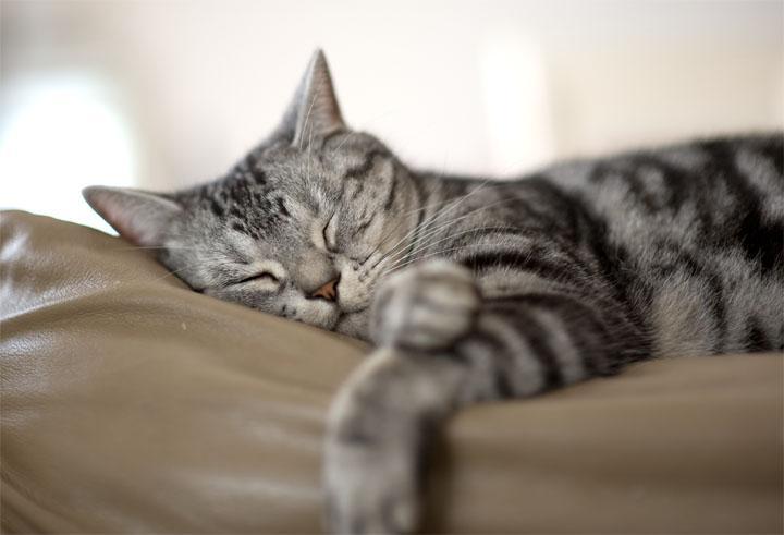 昼寝 ちび.jpg